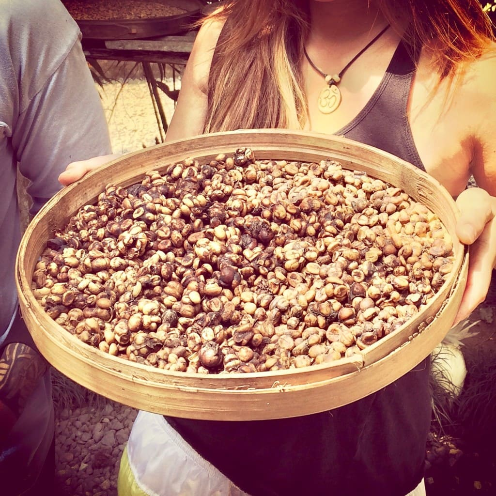 Kopi Luwak Coffee - Cat Ingested & Pooped Coffee Beans. Most popular in Indonesia.
