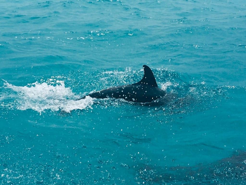 Dolphin Spotting in Loreto, Mexico