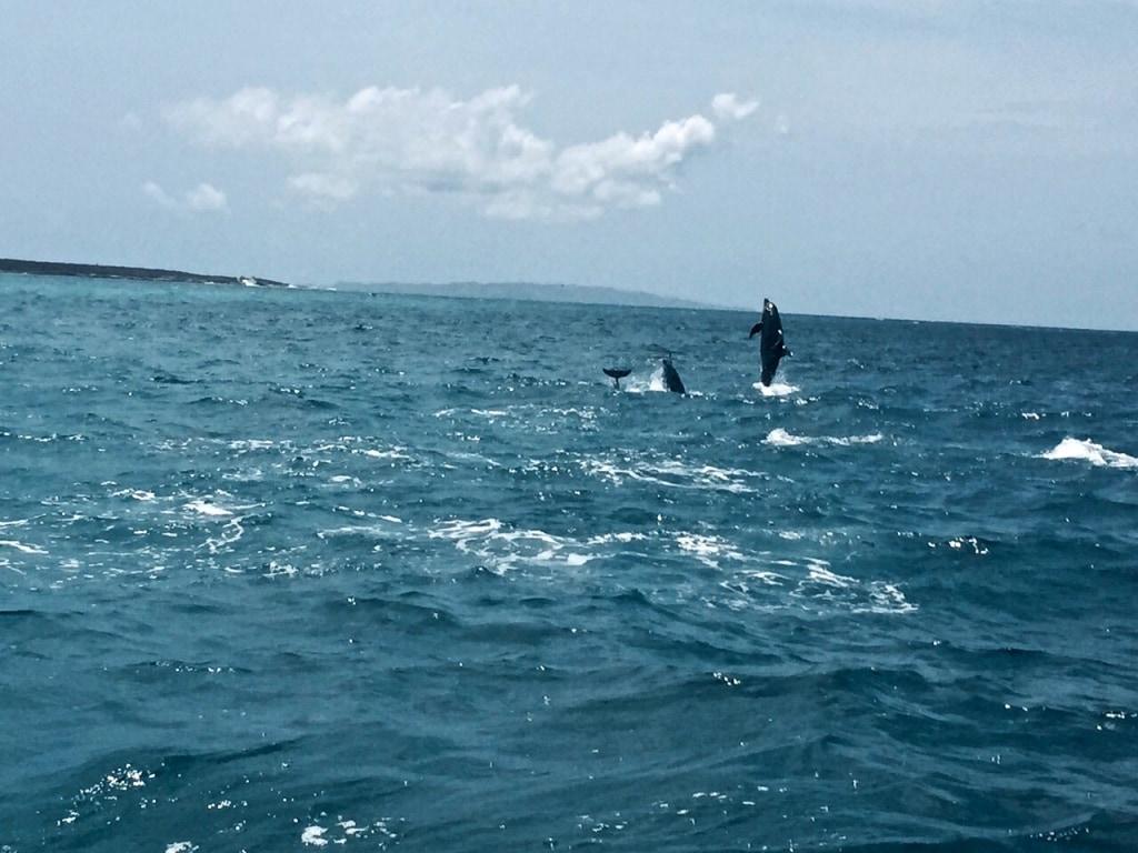 Dolphin Spotting in Loreto Mexico