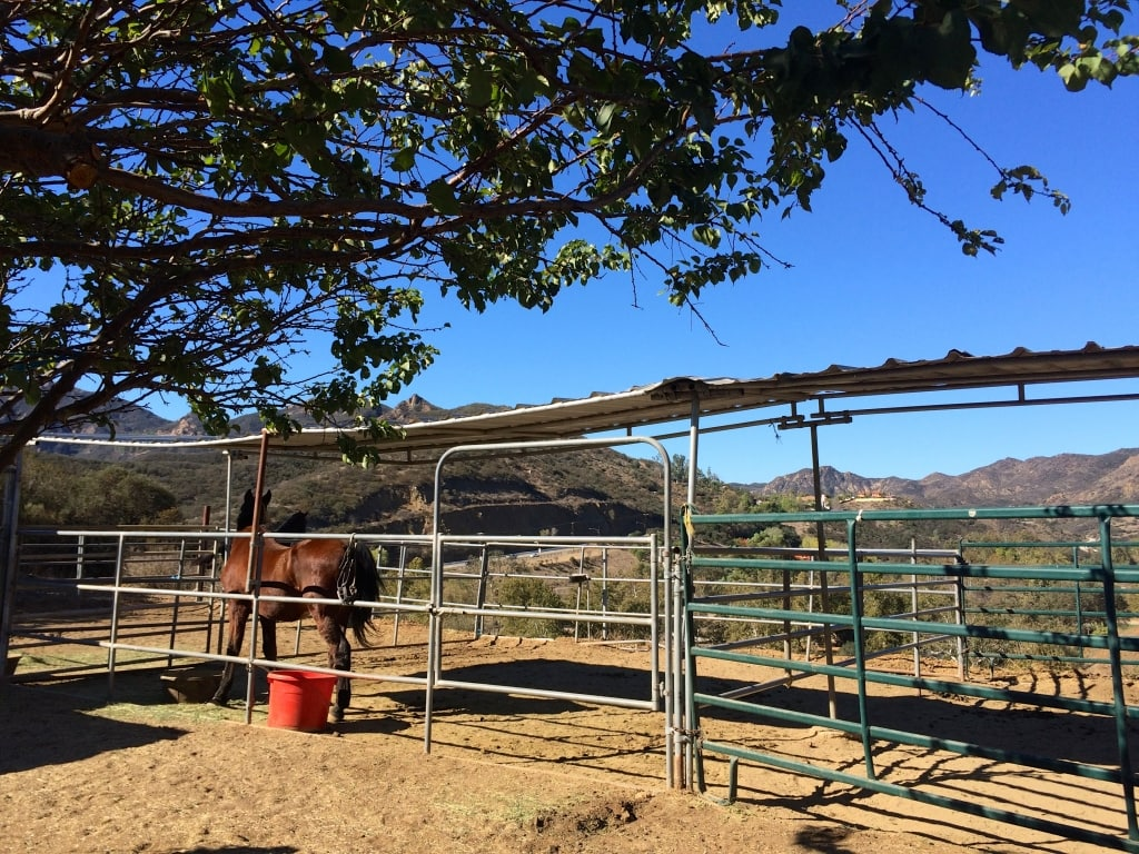 Horses in Conejo Valley