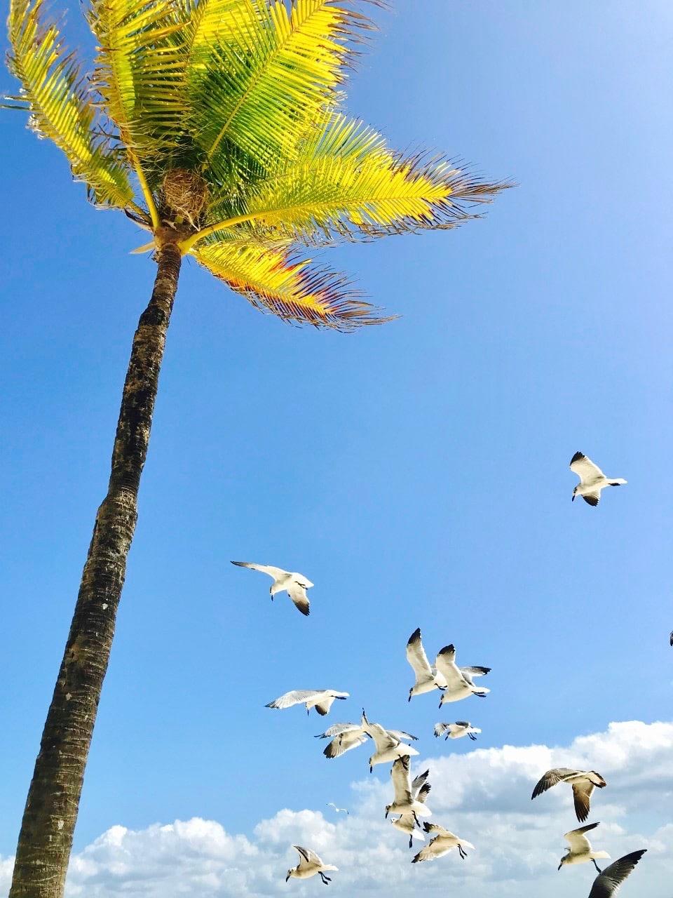 best all inclusive beach resort in playa del carmen
