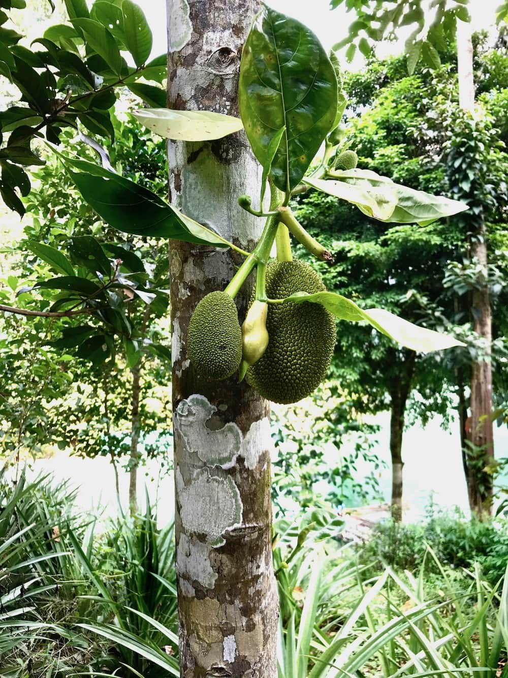 south thailand fruits