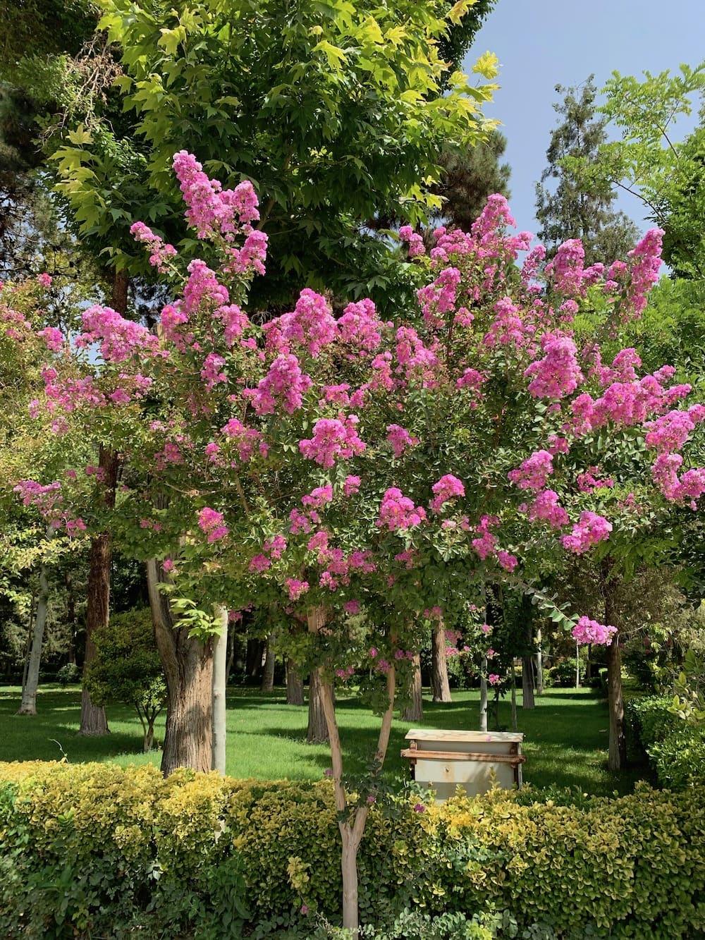 Iran Unesco Gardens
