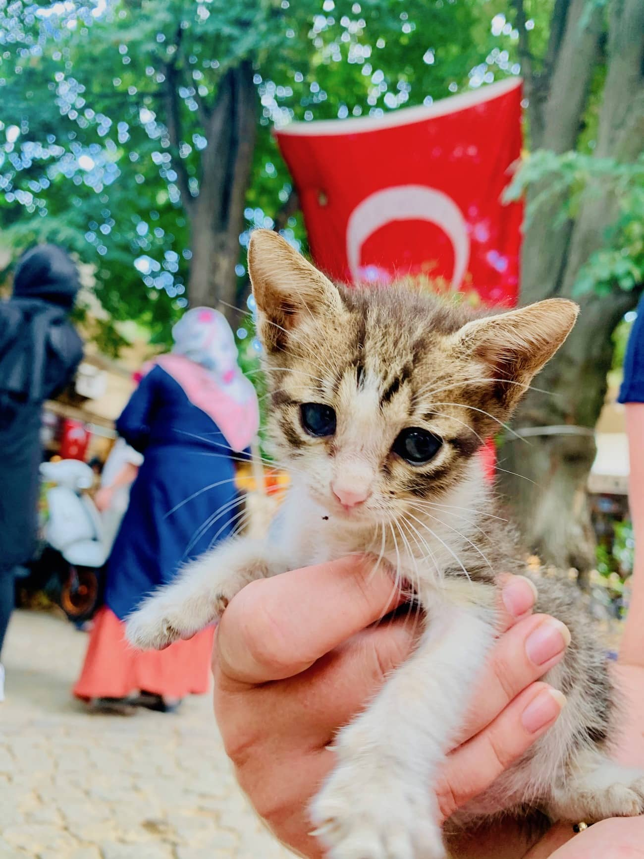 cutest turkish cats